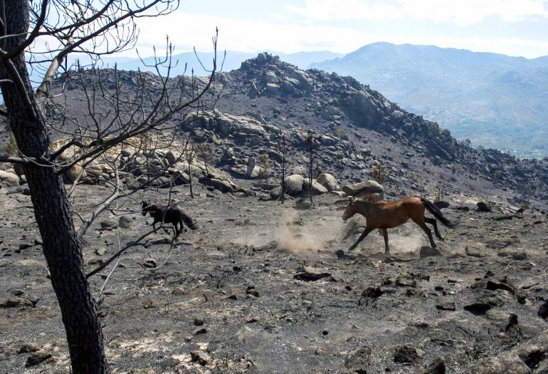 ADEGA esixe medidas urxentes de restauración nas zonas queimadas e a declaración de zona catastrófica